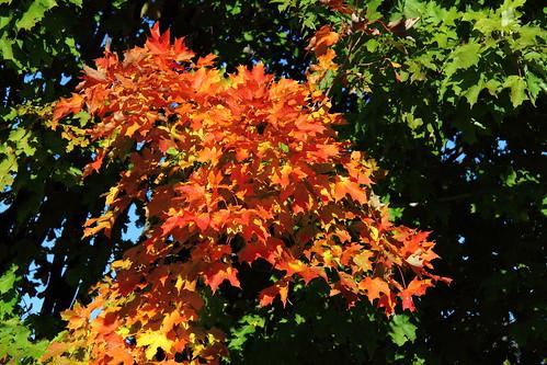 paysage landscape automne fall arbre tree nature natural feuille canada quebec iledorleans