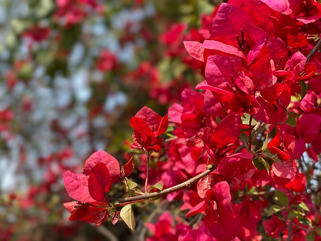 City Season - Bougainvillea, Udyog Vihar, Gurgaon