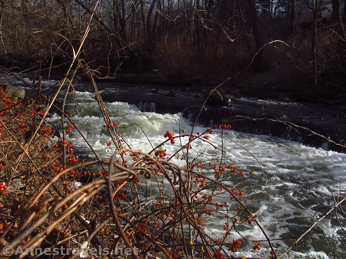 Berries along Irondequoit Creek, Channing H. Philbrick Park, New York