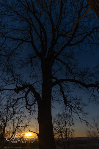 2020 alanmoditzphotography ridgefield washington alanalanmoditzcom eagleviewpark evening silhouette sky sundown sunset usa unitedstatesofamerica