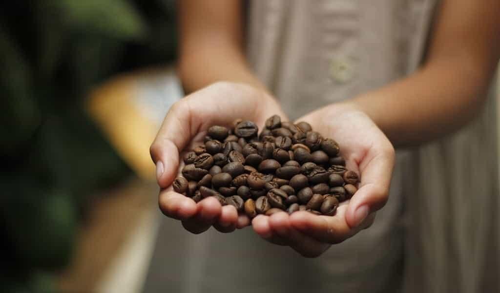 chaque-plant-de-café-arabica-provient-du-même-ancêtre