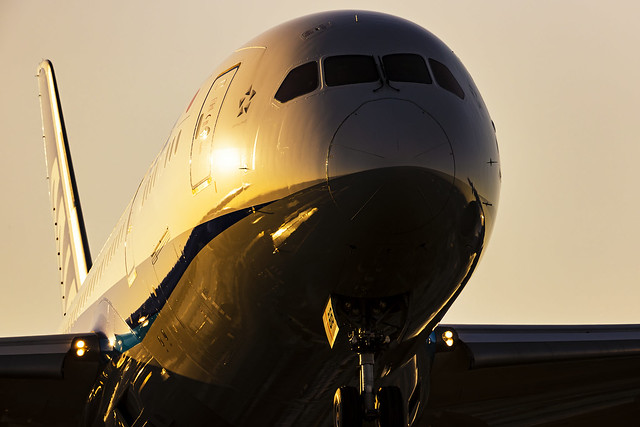 EOS-1DX MarkⅢ_03 787-8 ANA Dreamliner  JA818A