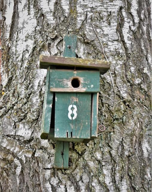 House no. 8