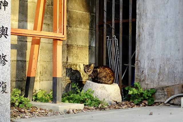 Today's Cat@2020ー03ー12