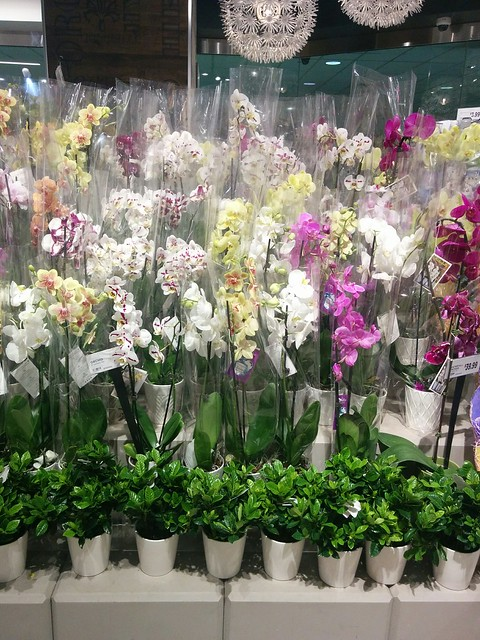 Orchid wall #toronto #collegepark #metro #grocerystore #flowers #orchid #orchids