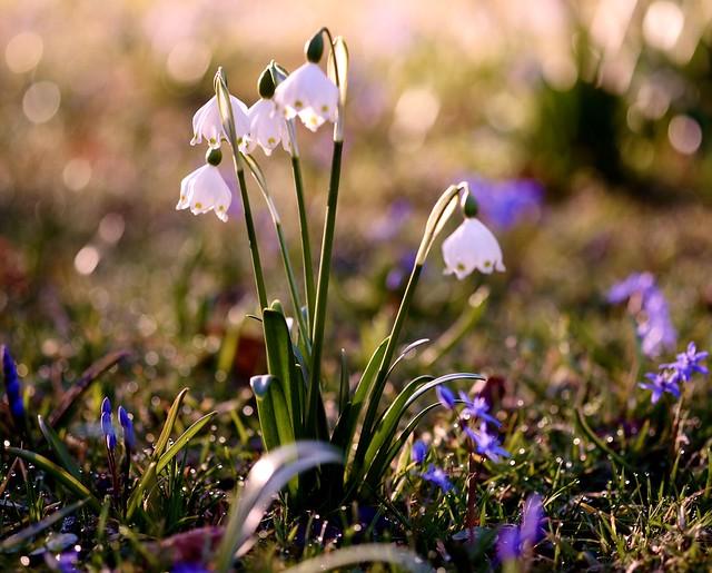 Spring in Hellbrunn