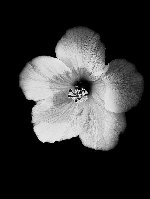 Beauty unto itself