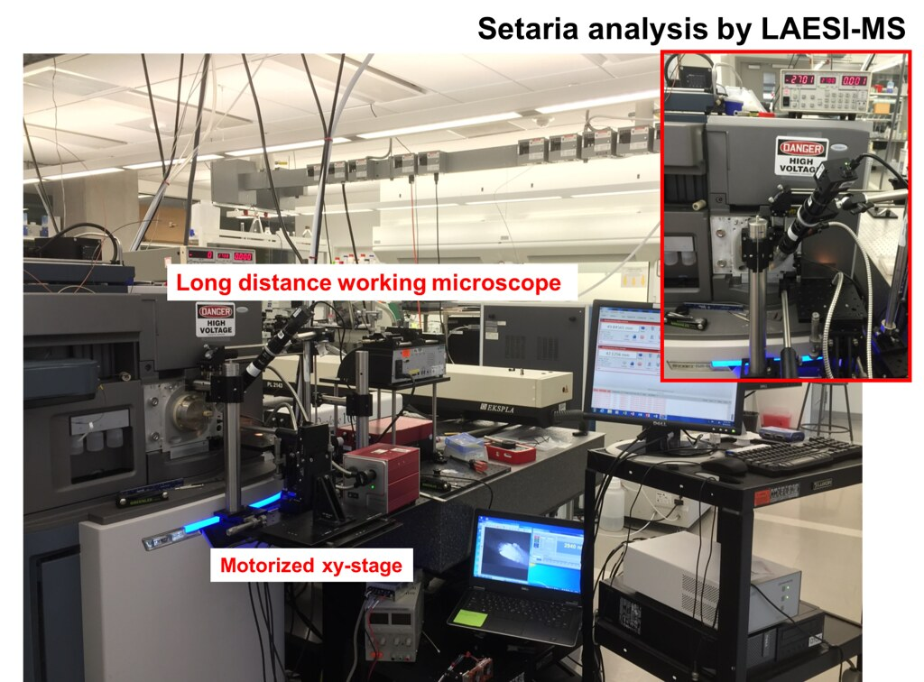 LAESI-MS setup for Setaria roots