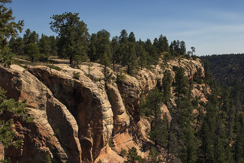 earthnaturelife wondersofnature landscape cliff ponderosapine uncompahgreplateau colorado canyon sandstone