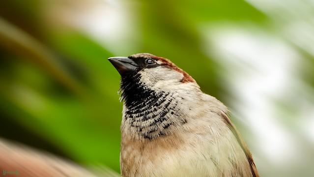 Bird - 8184
