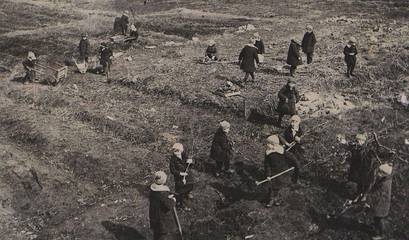 15. Очистка огорода перед запашкой