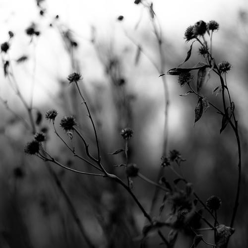 d5000 dof nikon abstract autumn blackwhite blackandwhite blur branches bw depthoffield flowers forest marshland monochrome natural noahbw prairie square wetlands woods