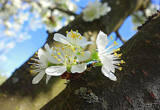 beauty on old tree