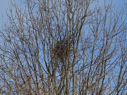 Elster-Nest | by naturgucker.de