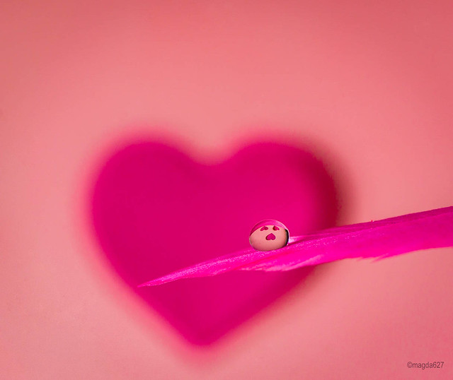 Droplet of love for everyone !