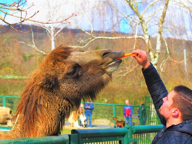 Opel Zoo in Germany in the Taunus Hills near Frankfurt am Main