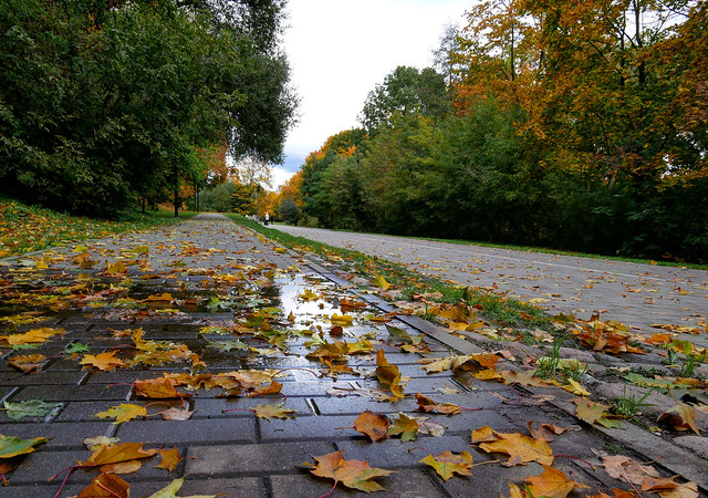 Осенняя дорога домой - Autumn road home