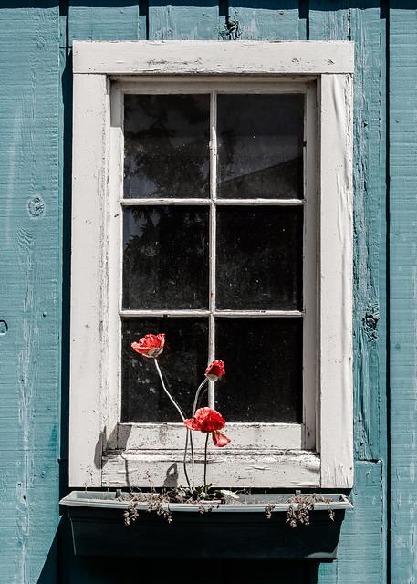 Nye Beach Window