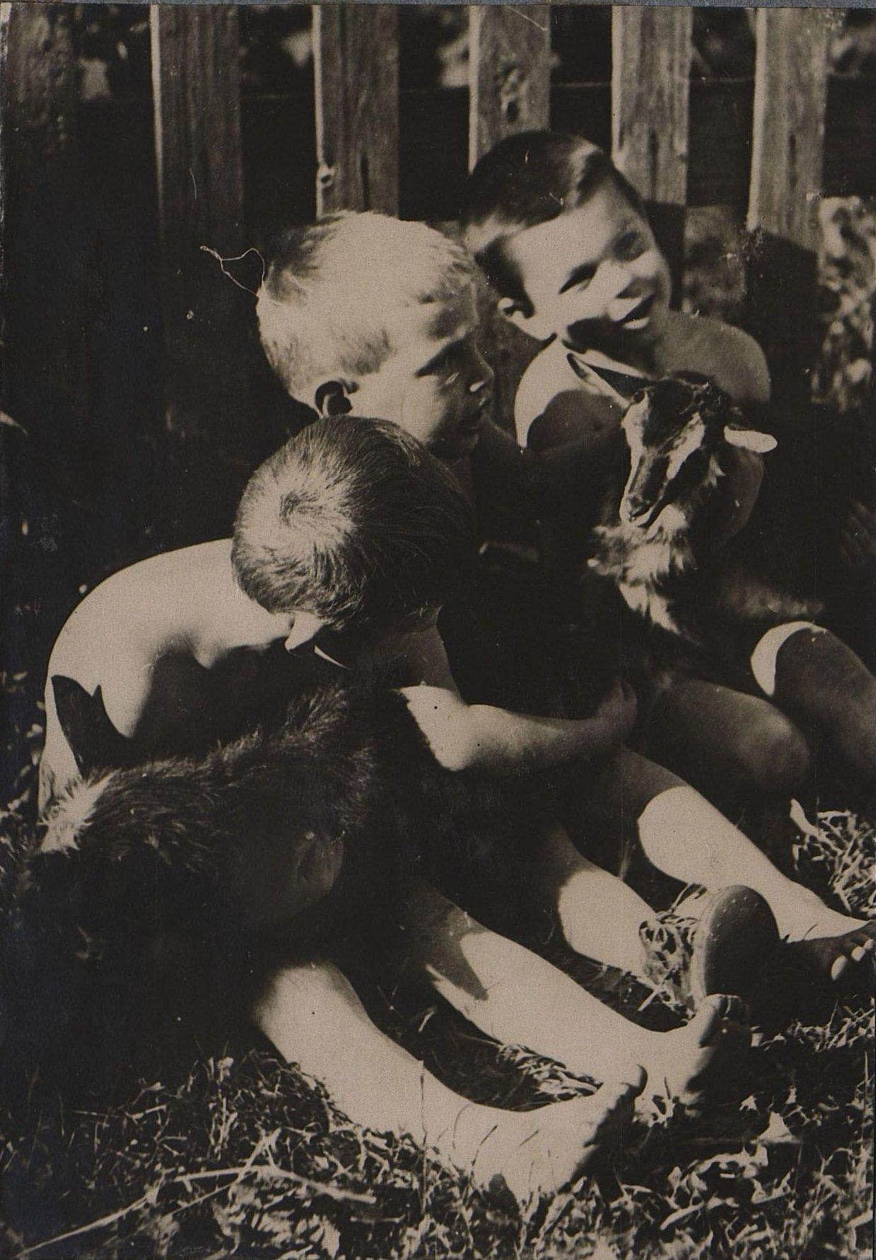 45. Дети с козлятами