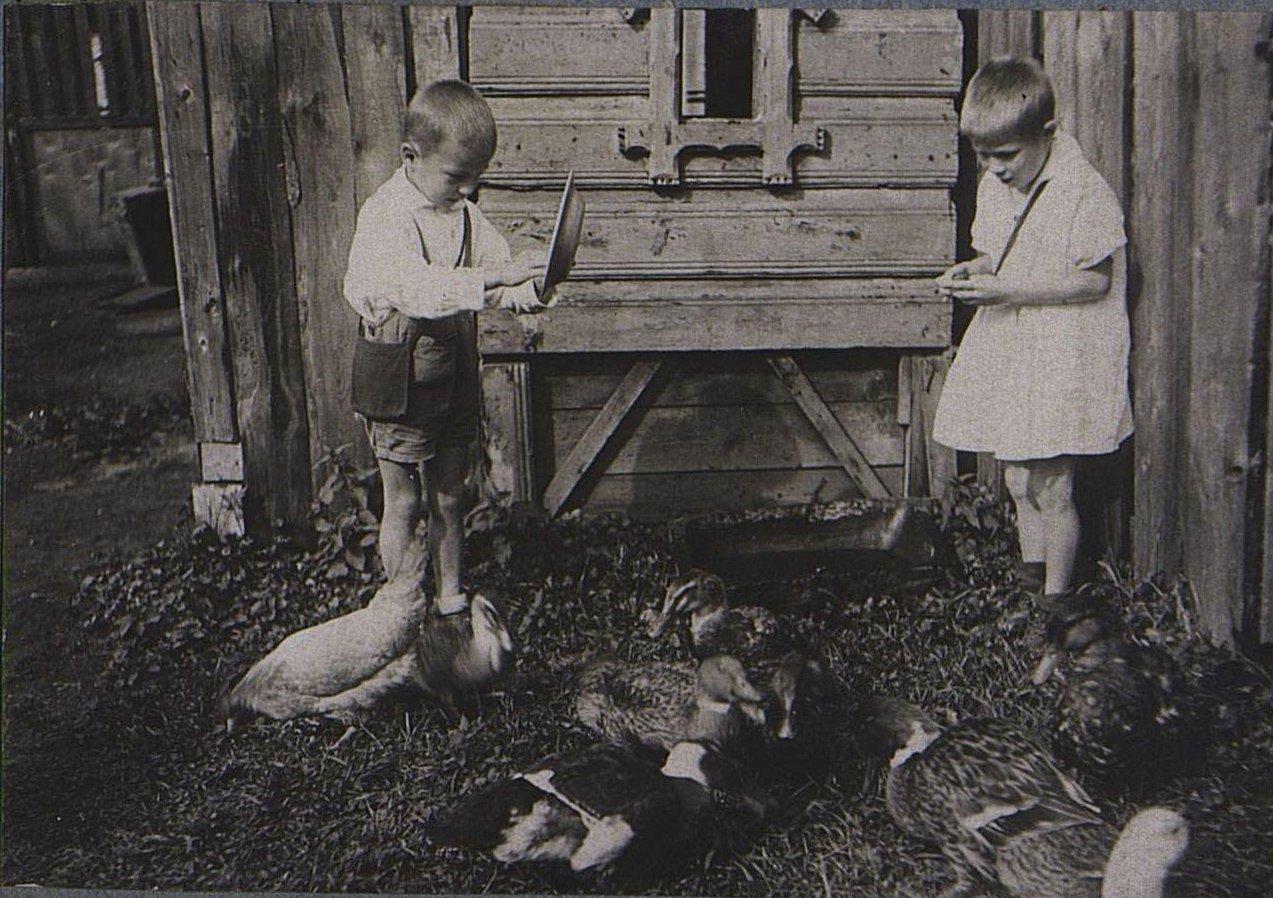 39. Дети с домашней птицей1
