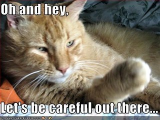 cat-be-careful-out-there