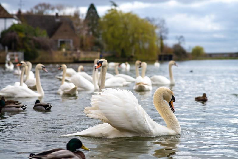 St. Ives, Cambridgeshire
