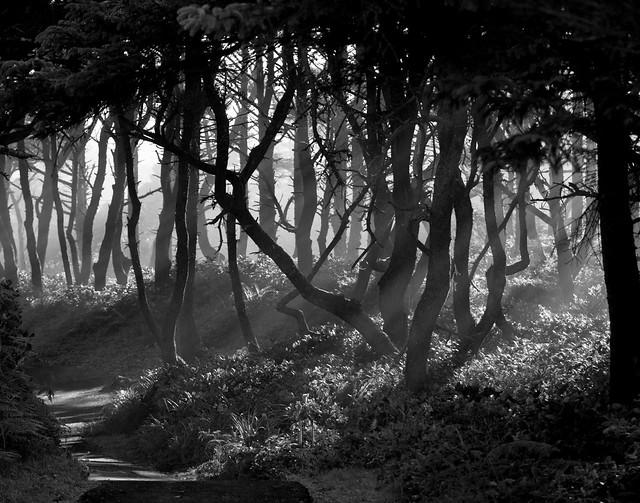 Seal Rock Trees