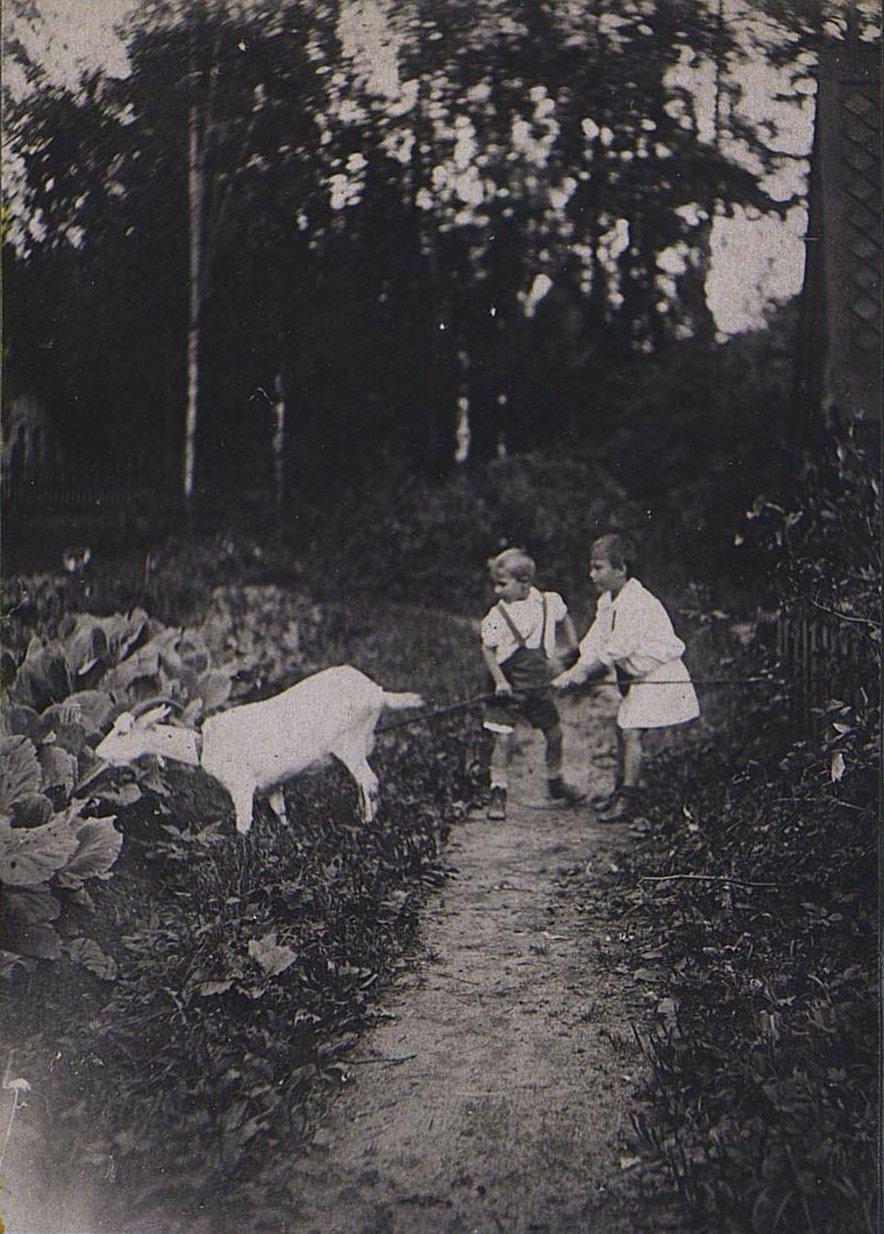 46. Дети с козой
