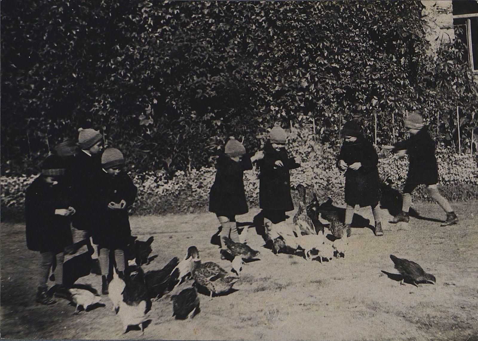 41. Кормление птиц.