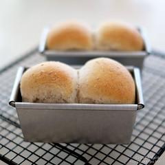 自家製酵母全粒粉ミニ食パン 20200312-DSCT3575 (2)