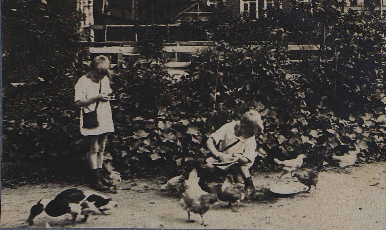 42. Кормление птиц