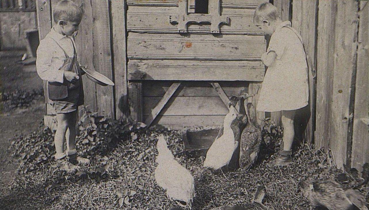 40. Дети с домашней птицей