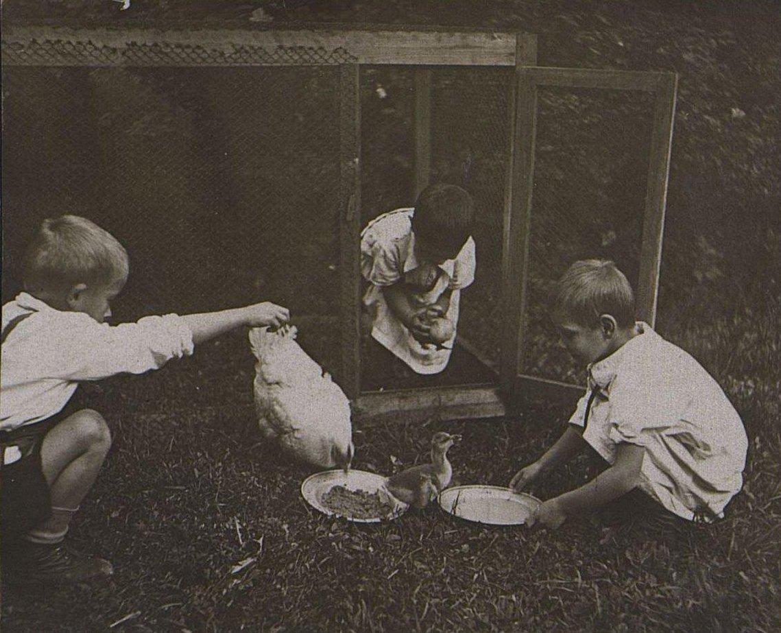 37. Дети с домашней птицей