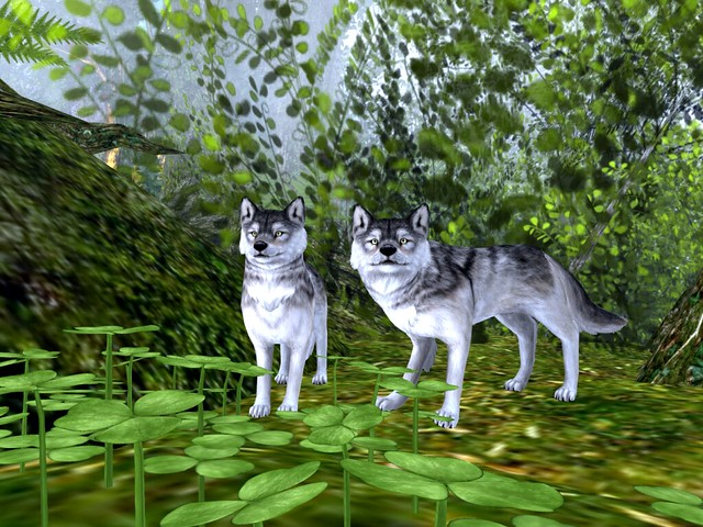 Finian's Dream - Gray Wolves In the Shamrocks