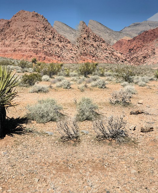 Nevada - Pretty colours on the Calico hike