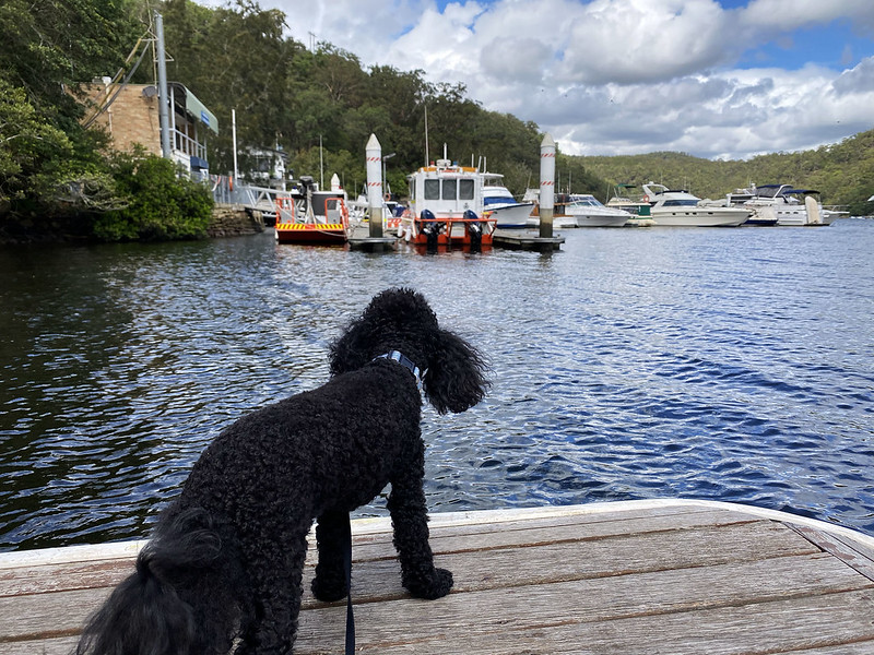Scully checking out Berowra Waters