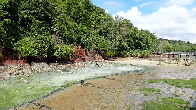 White sediments washing up on Chek Jawa