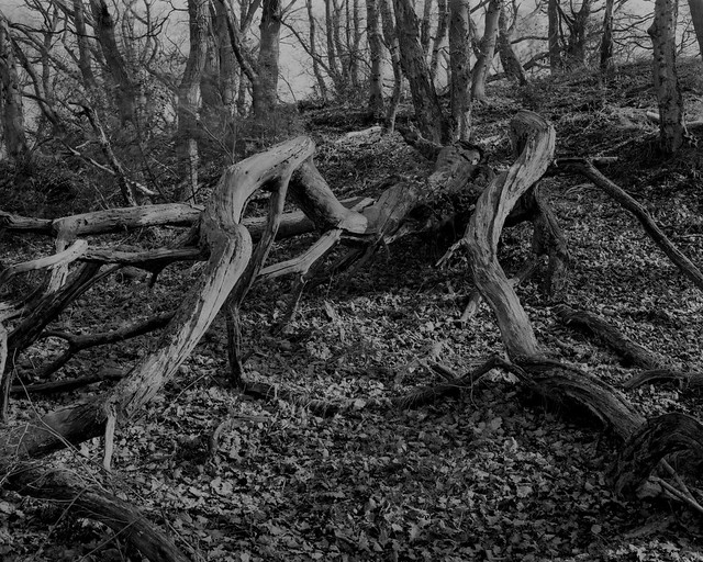 Hyons Wood, Walker Titan SF, Rodenstock 150mm, Rollei Ortho25+ in HC110