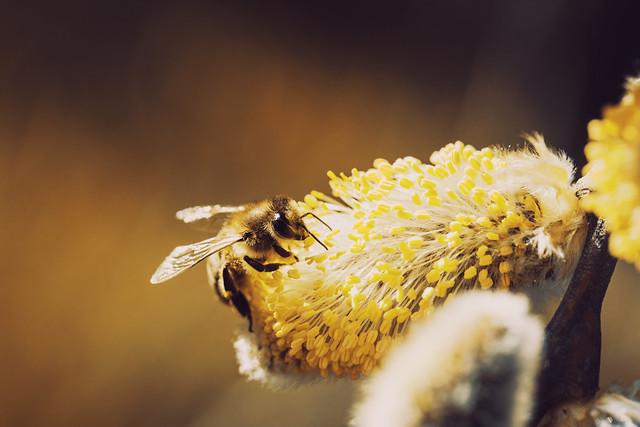 Dreamy Bee