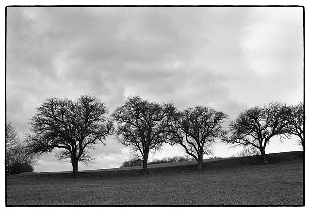 19009_59 Trees under storm clouds, December 2019