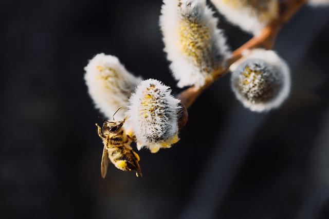 Bees Gymnastics