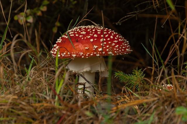 Die Welt der Pilze  (70)