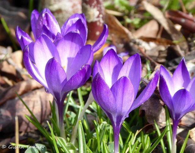 Grüße aus meinem Frühlingsgarten