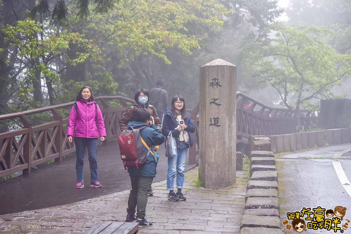 阿里山櫻花季 最新花況-1