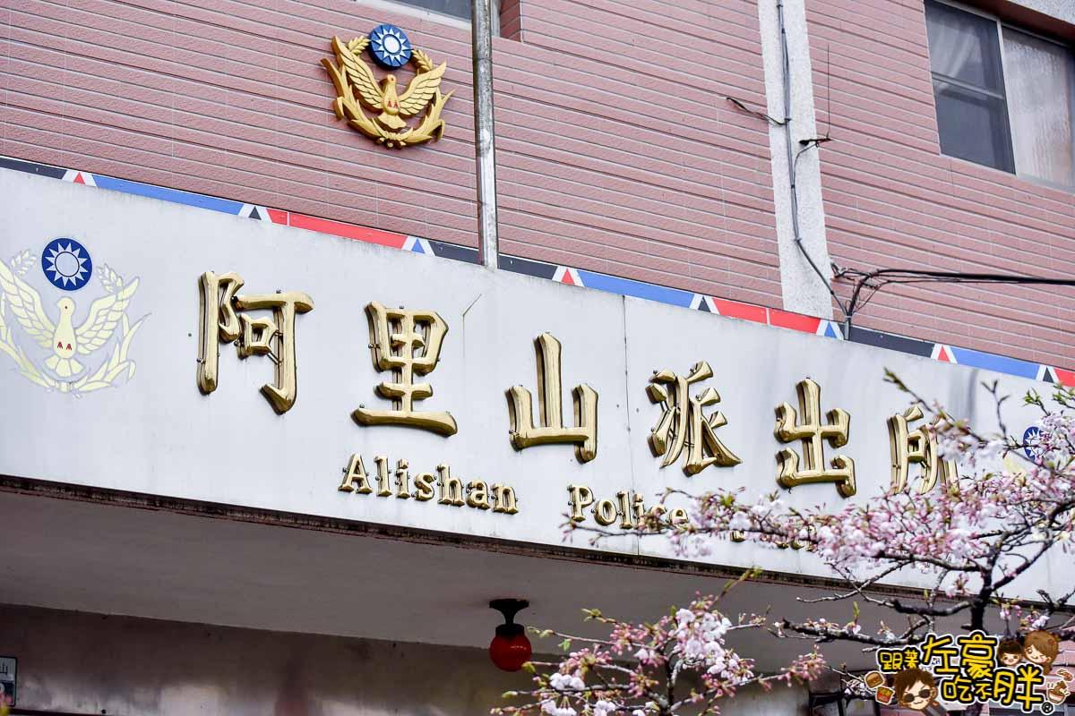 阿里山櫻花季 最新花況-18