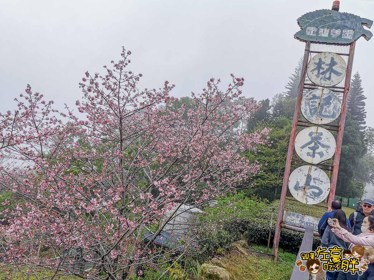 阿里山櫻花 林記茶山-台18線54.6km  -14