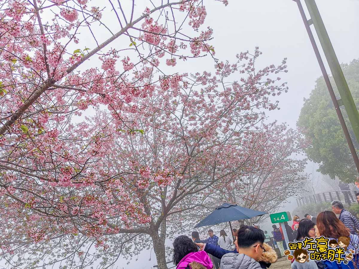 阿里山櫻花 林記茶山-台18線54.6km  -8