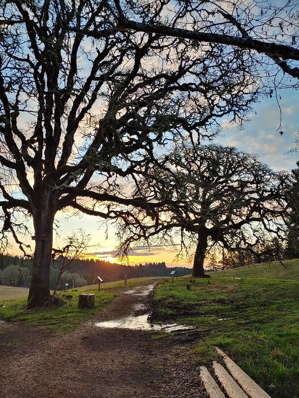 Morning at Miller Woods