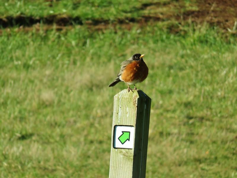Robin at Miller Woods