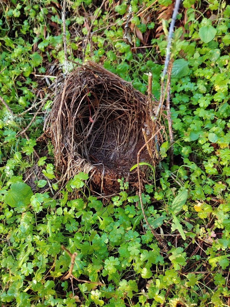 Nest along the trail at Miller Woods